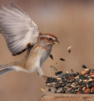 BirdFeeding-500