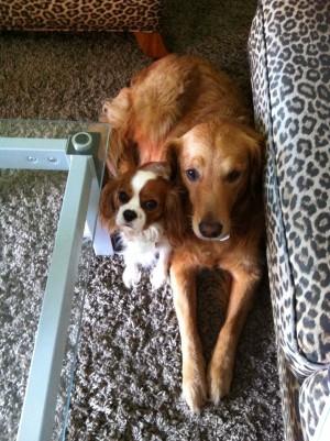 Daisy and Darla